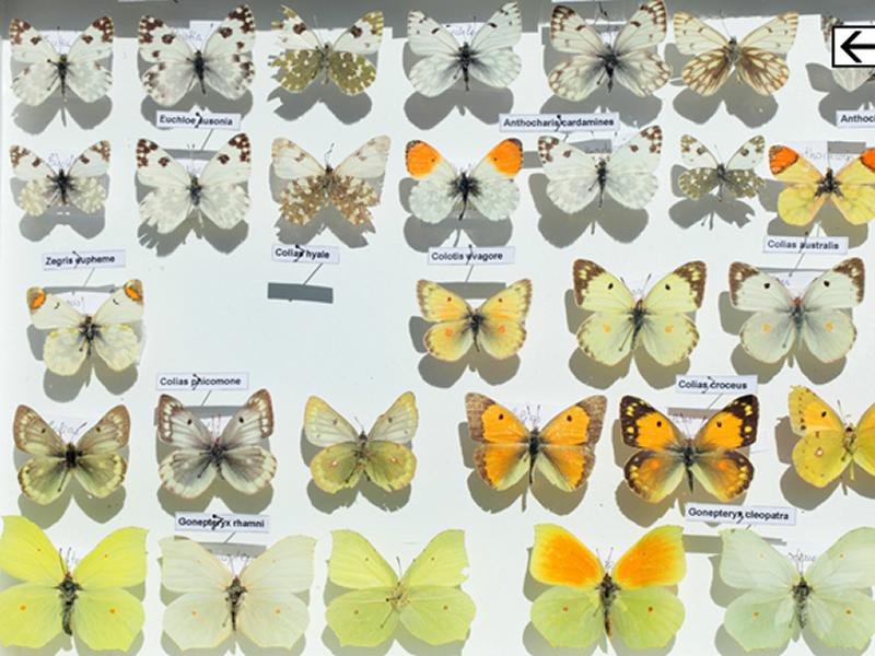 La casa de les papallones