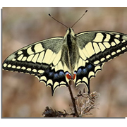 totnens-sortim-museu-papallones-catalunya0