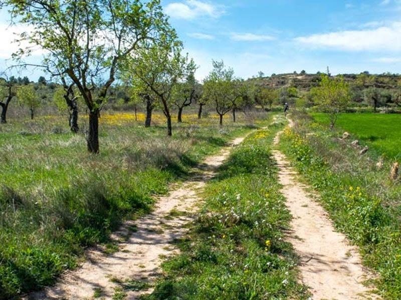 Ruta dels miradors de l'Ebre a La Granadella