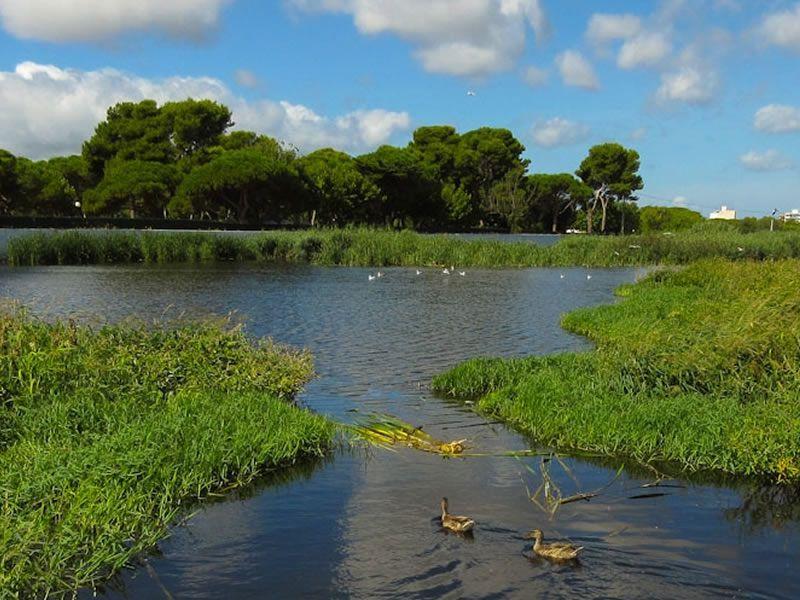 Ruta pels estanys del Ridaura