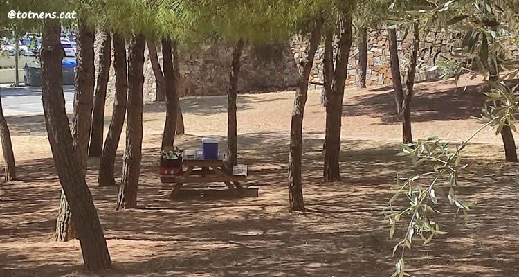 Parc de Catalunya de Sabadell zona de pícnic