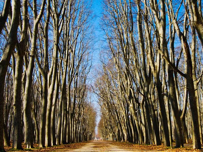 Parc Ribes del Ter i Devesa a Girona