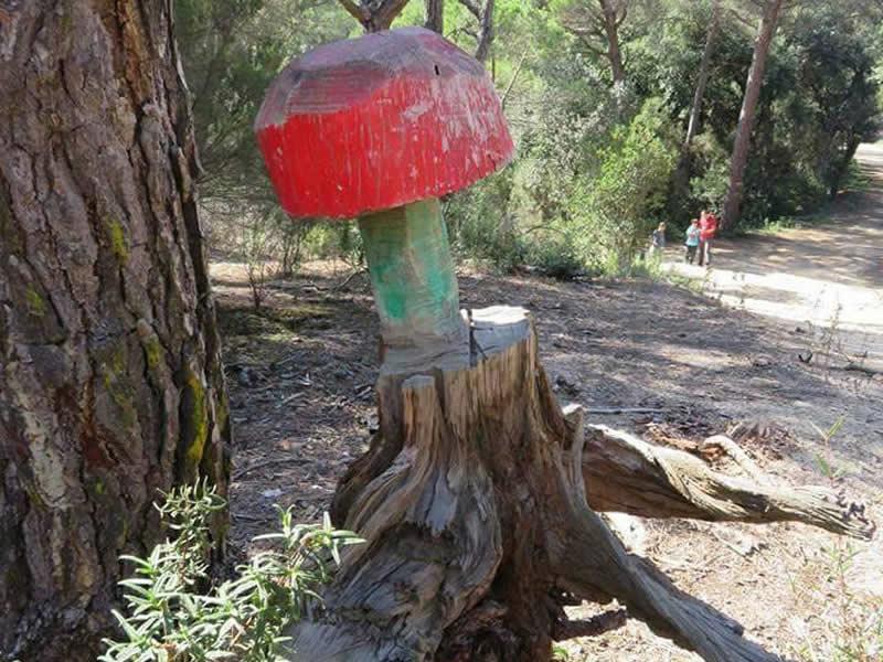 bolet a l'arbre