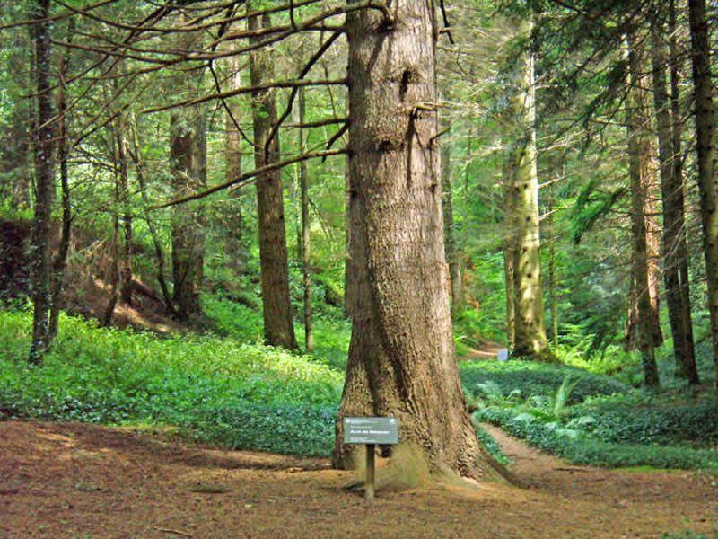 Arborètum de Masjoan