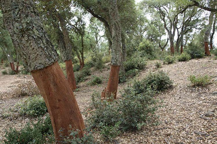 totnens-dolmen-ca-larenes-dosrius8