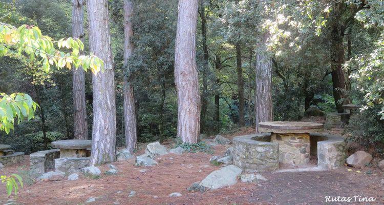 El bosc pintat de Poblet, ruta micològica amb nens