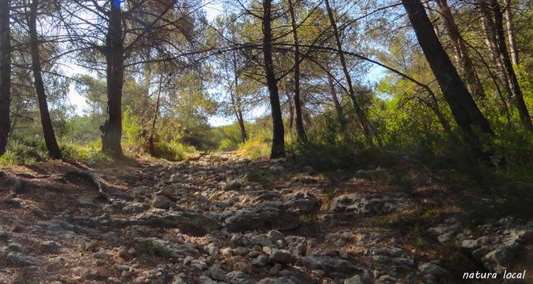 Ruta de les barraques de pedra seca a Castelloli