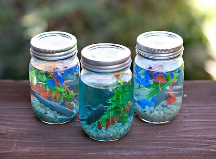 Com fer un aquari en un pot de vidre