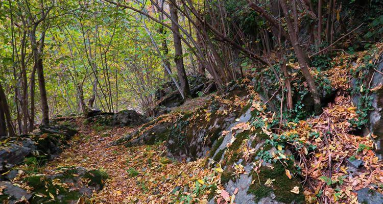 Excursió per Capdella pel camí del Canal Xic