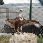 Granja Escola La Manreana - Centre de Natura i Fauna Vimferri