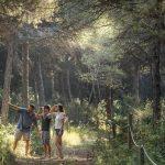 Pineda de Can Camins al Prat de Llobregat