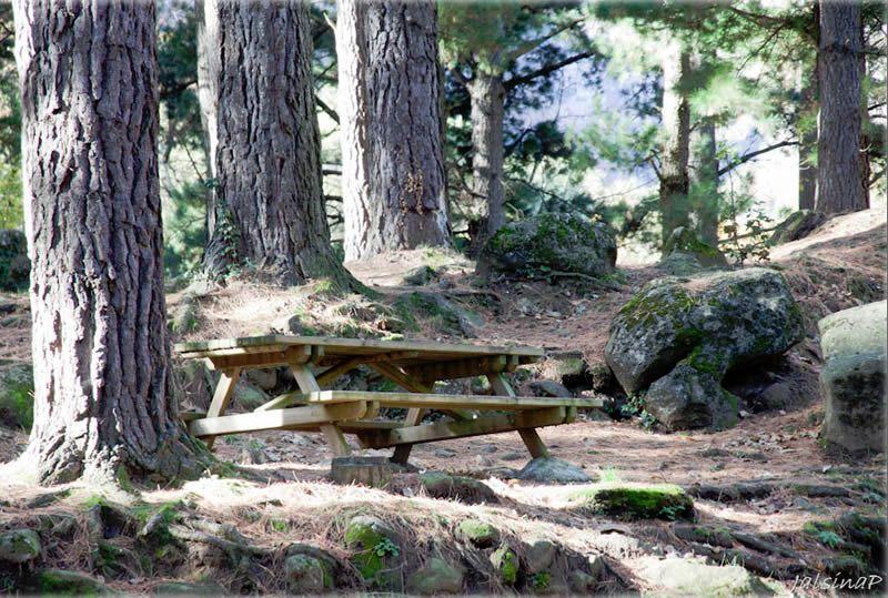 Àrea de lleure Els Pins a Sant Privat d'en Bas