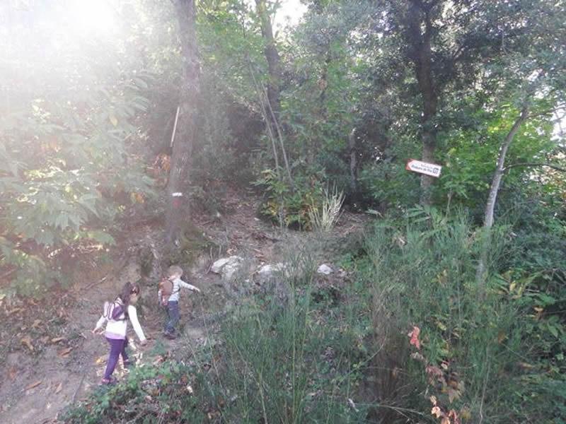 Roques del Rei a Sant Hilari Sacalm