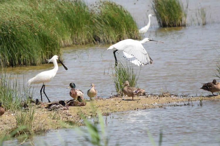 Delta del Llobregat, espai natural protegit