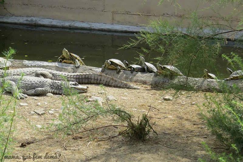 CRARC, Centre de Recuperació d'Amfibis i Rèptils de Catalunya