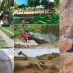 Excursions per descobrir animals singulars en família