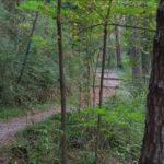 El camí del metge a Vilada