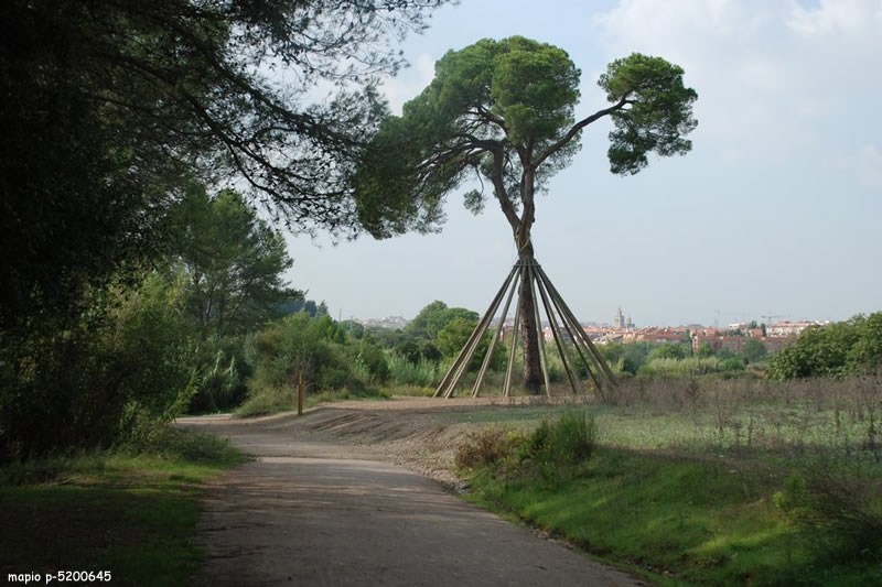 Excursio del Pi d'en Xandri a l'ermita de Sant Medir 20
