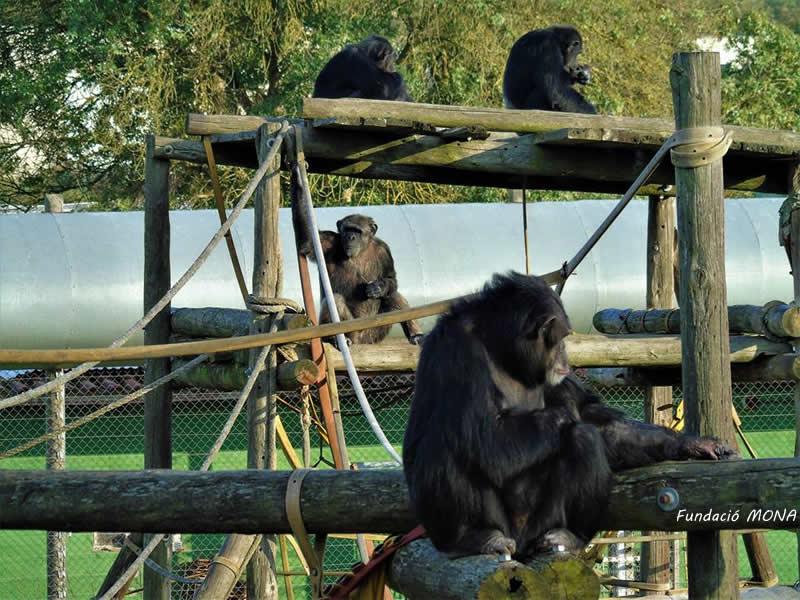 Fundació MONA a Riudellots de la Selva