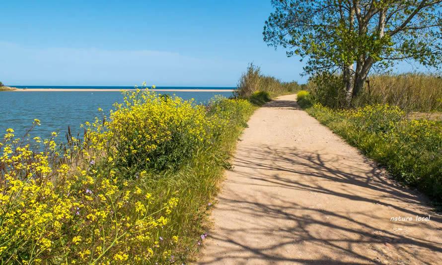 La mota del Ter i la platja de la Fonollera