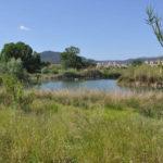 ruta wikiloc des dels Aiguamolls de Martorell fins les platges del Prat