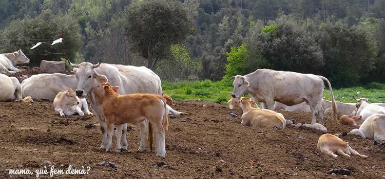Fuives, Centre Mundial del Ruc Català a Olvan