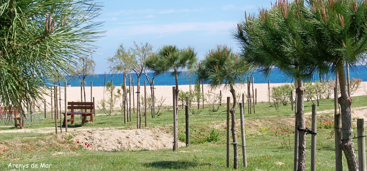 Àrea de pícnic Rial de la Serp a Arenys de Mar