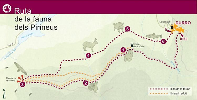 Ruta de la fauna de Durro a l'Alta Ribagorça