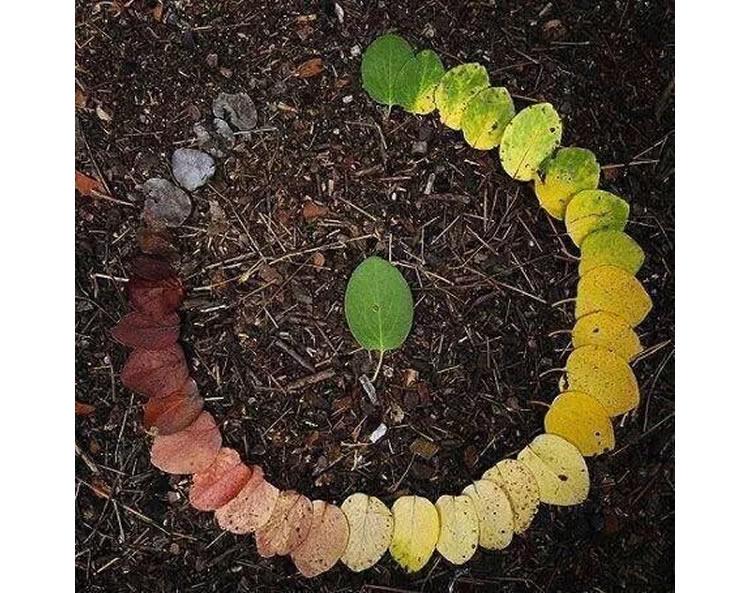 treballar la tardor amb els colors de les fulles