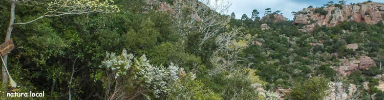 ruta del bosc de les bruixes d'Argentera