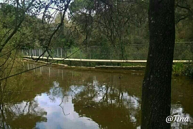 Pantà de Can Borrell a Collserola
