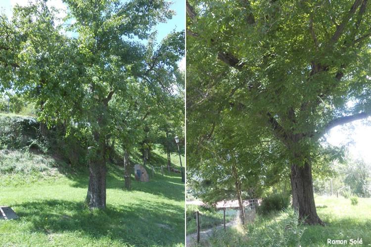 Arborètum de Vidrà