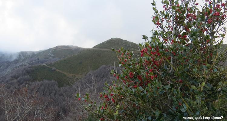 Valles Oriental, excursions i activitats amb nens