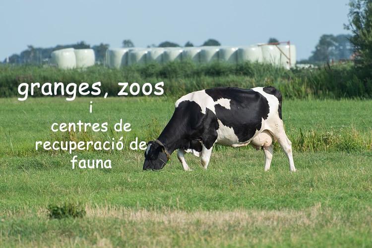 granges amb nens