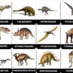 Memory de dinosaures per imprimir 02