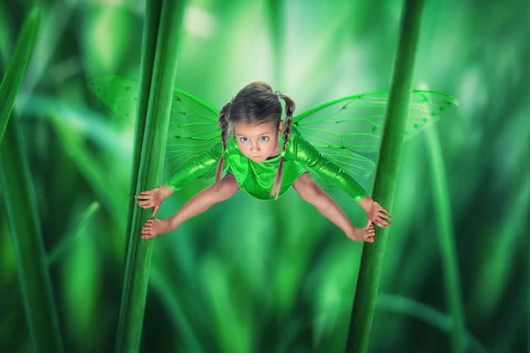creatives fotos de John Wilhelm insecte