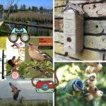 descobrint els ocells amb nens