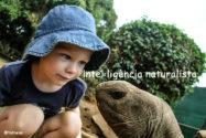 Intel·ligència naturalista