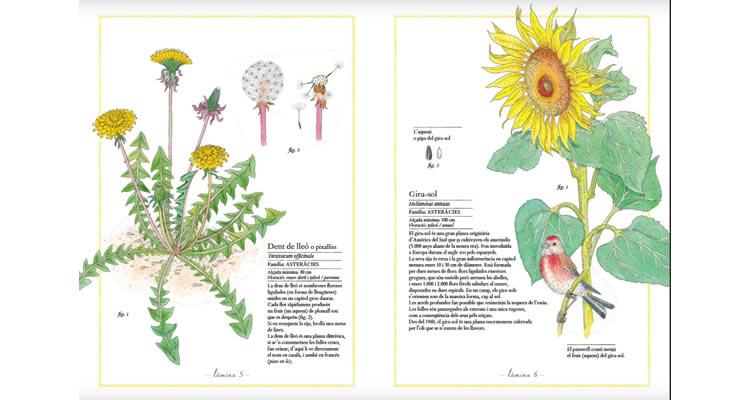 Inventari il·lustrat de les flors - Editorial Kalandraka