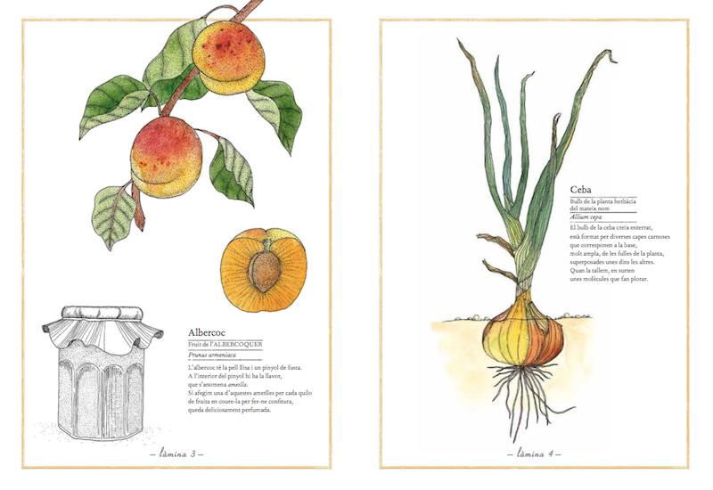 Inventari il·lustrat de fruites i hortalisses - Editorial Kalandraka