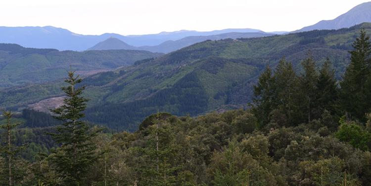 Espai forestal Camins de Bosc rutes
