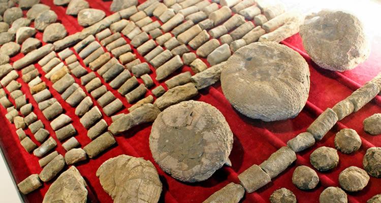 museu del fossil sant boi lluçanes