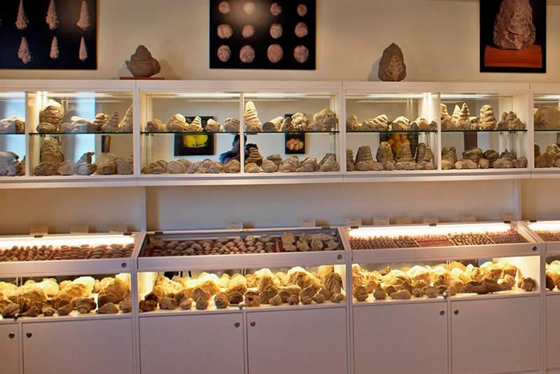 Museu de fòssils a Sant Boi de Lluçanès