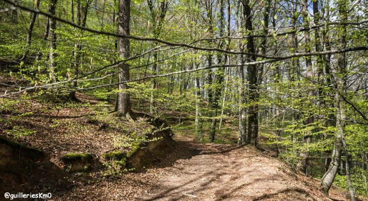 Ruta pels boscos d'en Serrallonga - Guilleries Km0