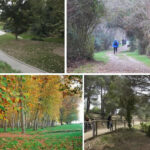 7 parcs on poder passejar i fer mini excursions