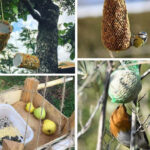 8 menjadores d'ocells trobades a Instagram