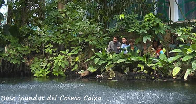 bosc inundat del Cosmo Caixa