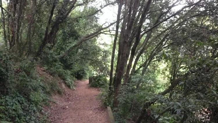 Arborètum de Catalunya de Cabrils