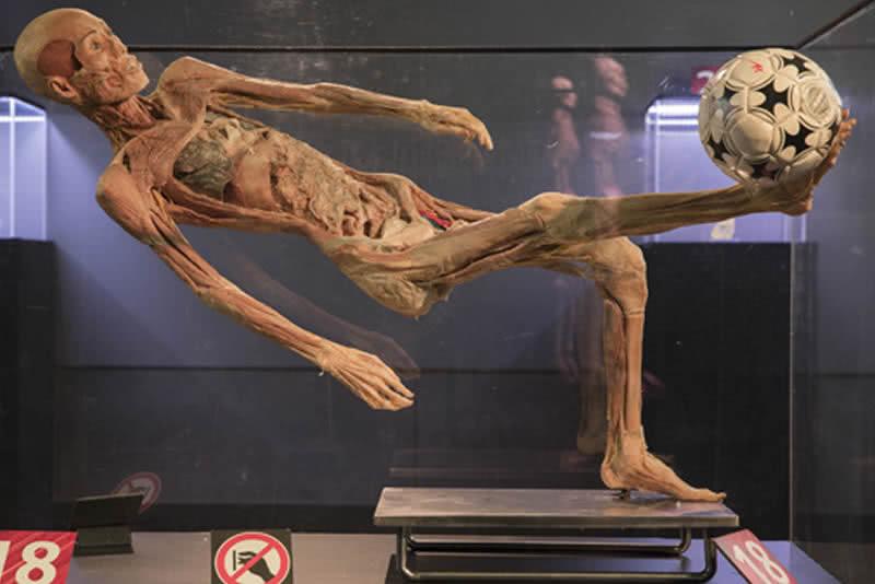 Exposició Human Bodies