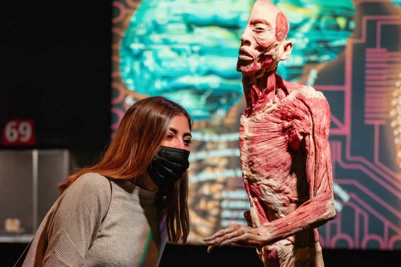 Exposició Human Bodies (sense cues)